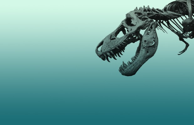 ws_Skeleton_Dinosaur_1920x1200